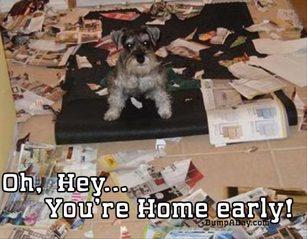 oh-hey-youre-home-early-dog-made-a-mess